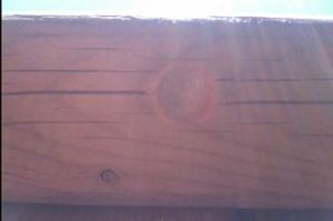 Carpenter Bee Hole - Day 3